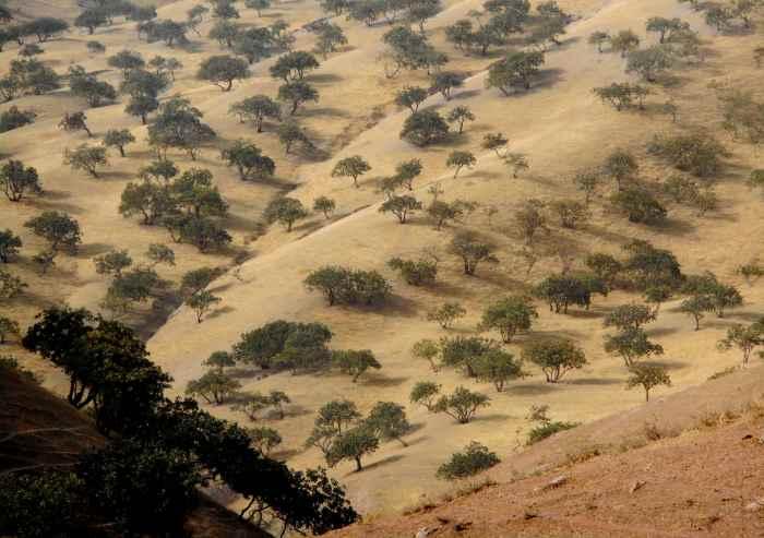Bosque de pistachos cerca del monte Khojamaston, Levakanttachos cerca del monte Khojamaston, Levakant